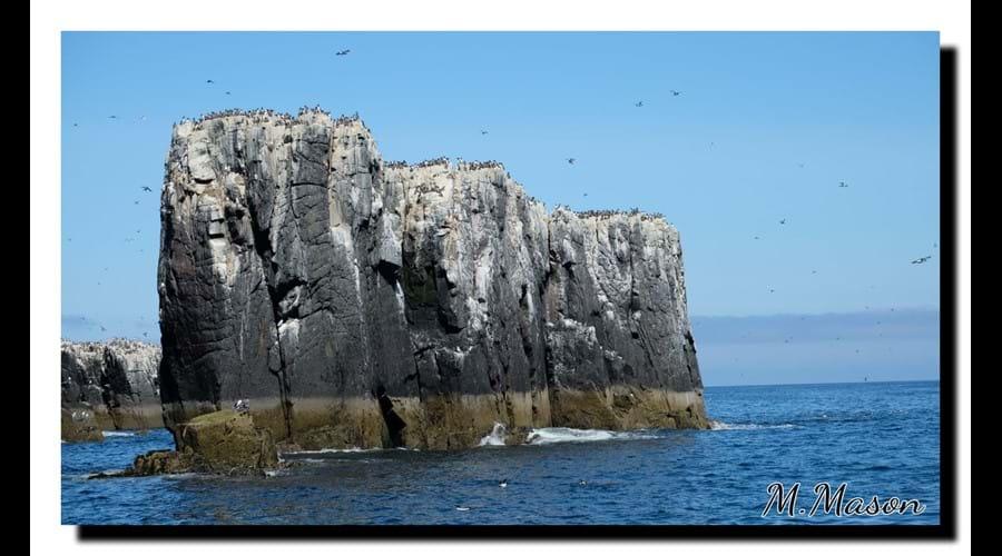 Seabirds nesting, Farnes. David Attenborough's favourite wildlife watching place!