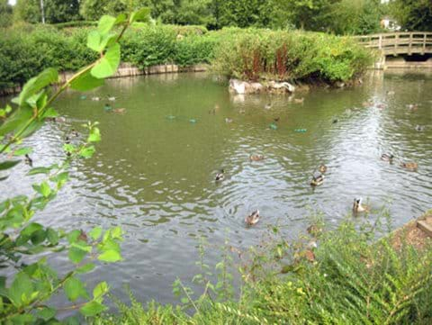 Swan Meadow Pond showing island in September 2010