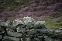Dry stone wall, Carloway, Isle of Lewis