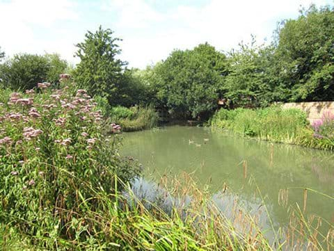 Swan Meadow Pond in August 2014