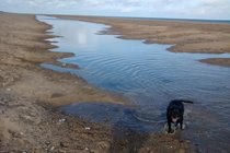 A lagoon formed on the beach this summer, the dogs love it!!