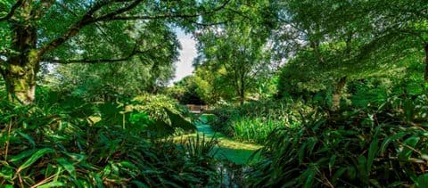 Botanical Gardens Chamrepus