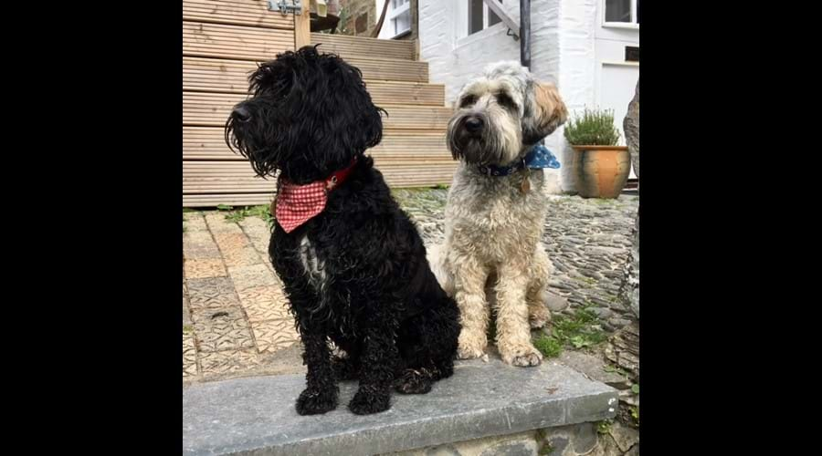 Two of our best dressed canine guests, spring 2018!