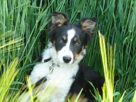 Meg the pup