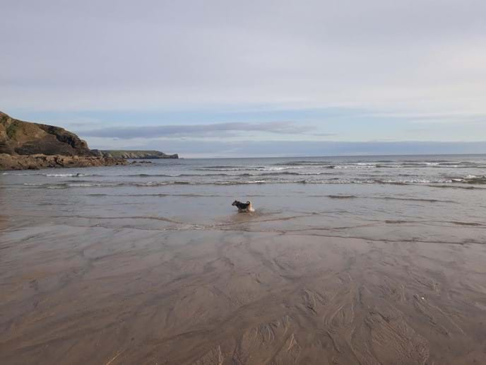 Dog friendly beaches nearby