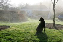 Bella keeping watch on a misty morning