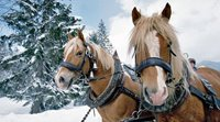 Take a Ride in a Horse-Drawn Sleigh