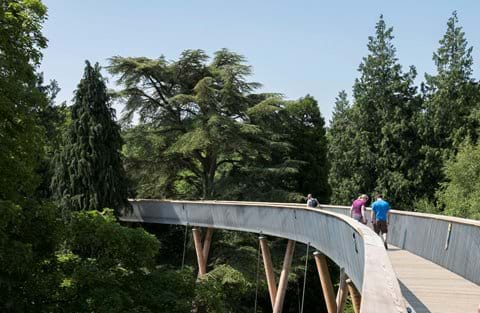 New Tree top walkway at Westonbirt Arboretum