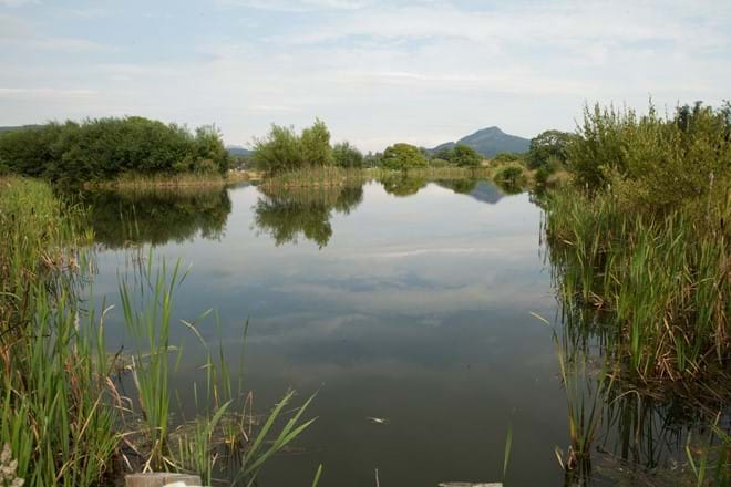 photo showing lakes at Eisteddfa Fishery where guests enjoy a discount on their fishing