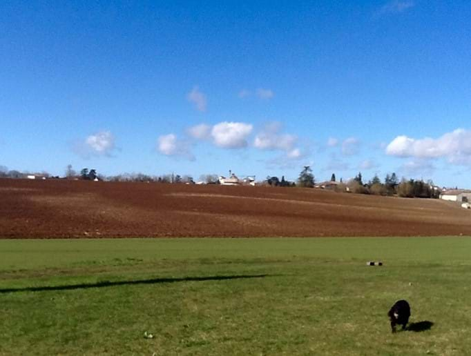 Sunshine and view across the field that will be sunflowers later this year!