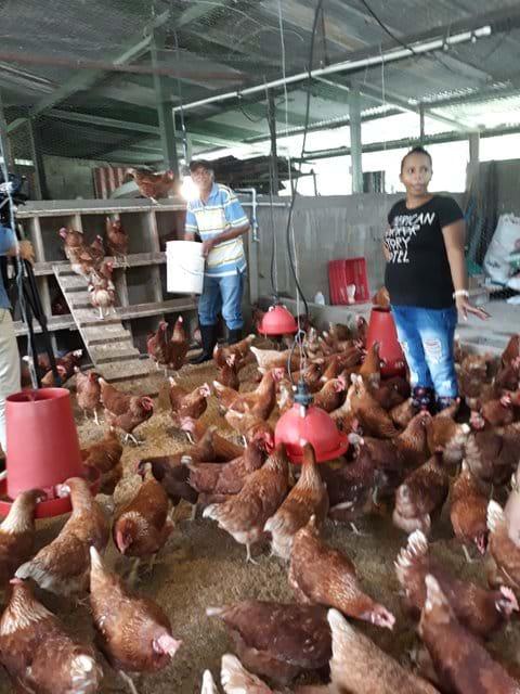 """Proyecto """"Huevos con amor"""""""