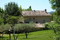 The back of the house from the olive grove