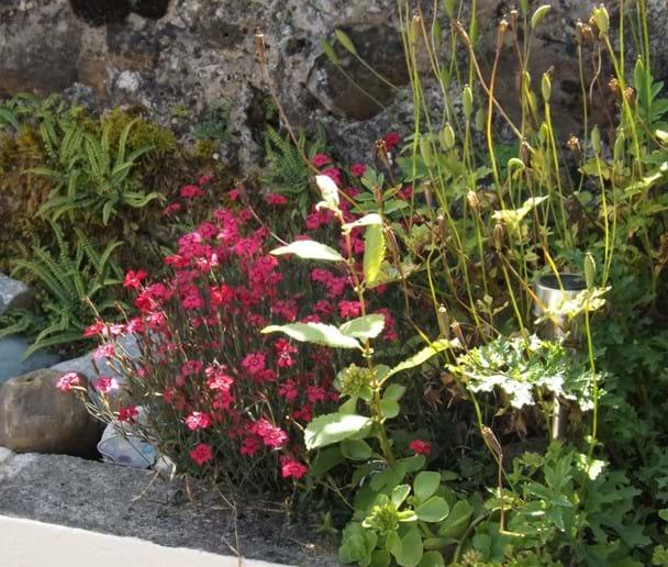 Rockery flowers in the private garden