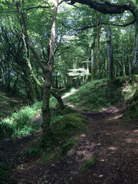 Magical trevaylor woods