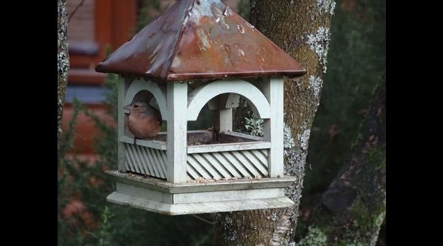 Birds visiting the garden