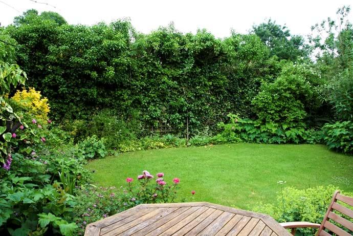 Small enclosed garden Summer