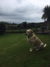 A four-legged visitor - King of the lawn !