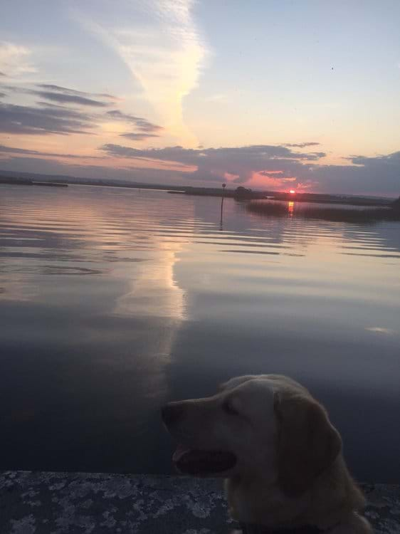 Even the dog can enjoy the sunset !