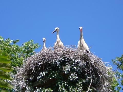 Storks at Aiguamolls Natural Park.