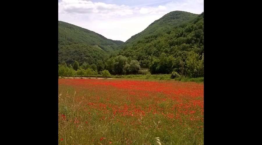 Summer poppy field near La Caze