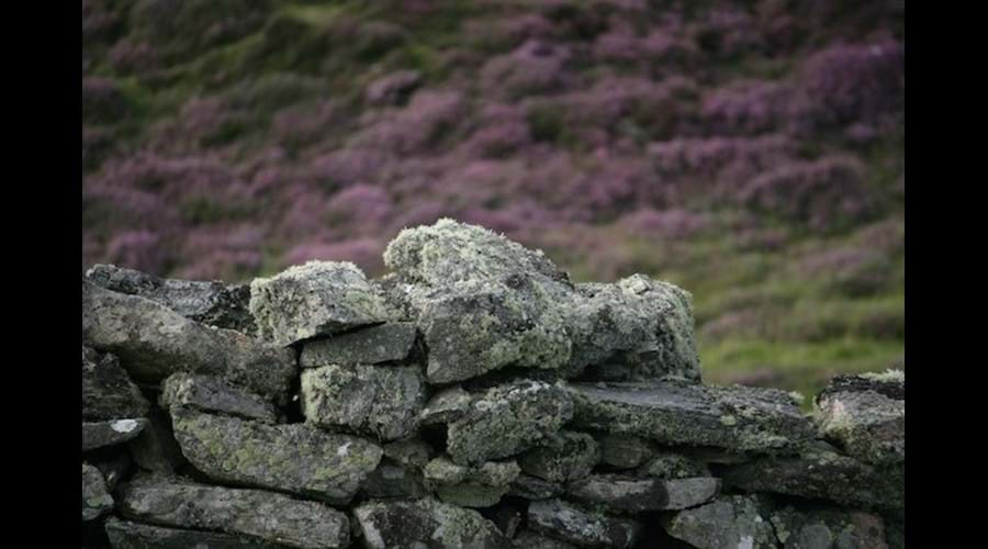 Dry stone wall, Carloway, Isle of Lewis