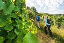 Maybe A Hike Through The Vineyard
