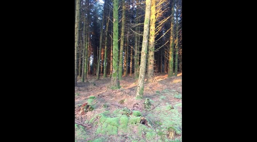 Mossy trees in Archallagan plantation