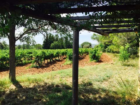 Looking into the vines from the cabanon