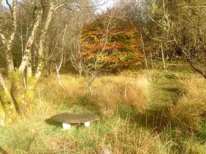 Golden woodland path