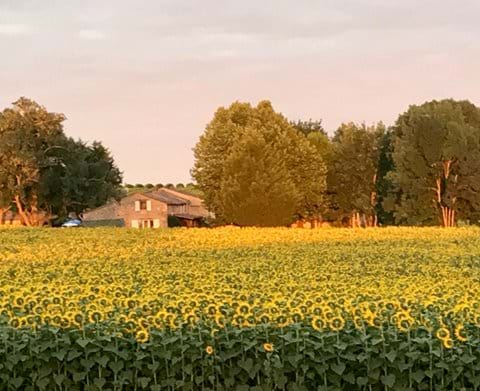 South-west France, Sunflowers, Vacation