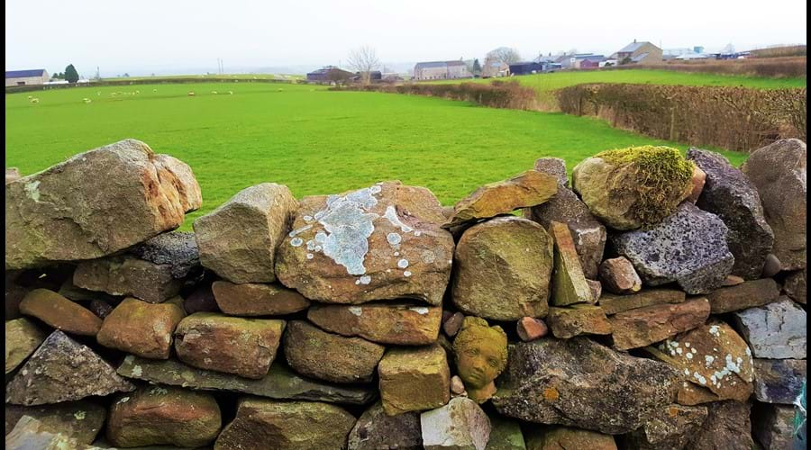 ....over the traditional dry stone wall with a pretty face!