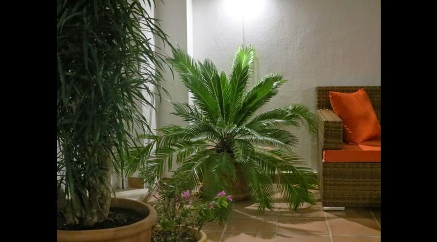 Plants on outside terrace