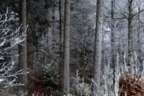 """An Afternoon Winter Stroll In The Forest With Picasso Our Dog (And A Glass """"Or Two"""" Of Mulled Wine)"""