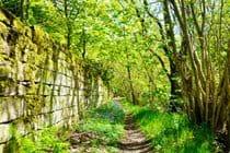 Deer Wall - Riverside Walks
