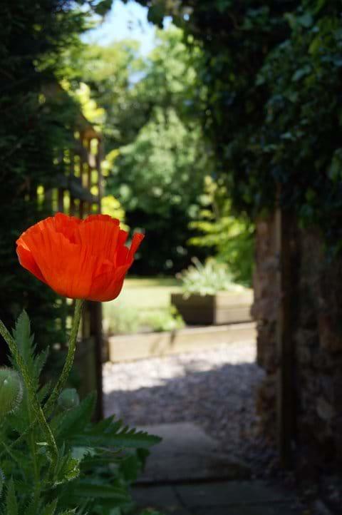 The 'Secret Garden'