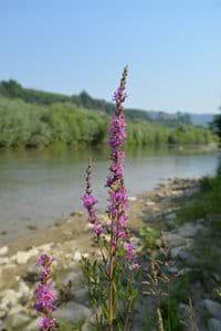 River Bormida 100m away
