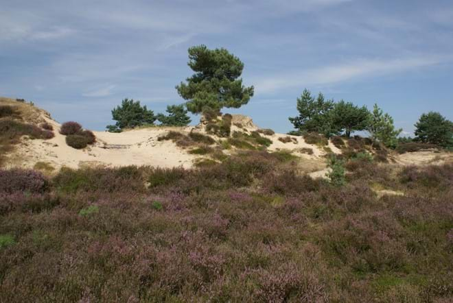 Moorland, forest, sand dunes