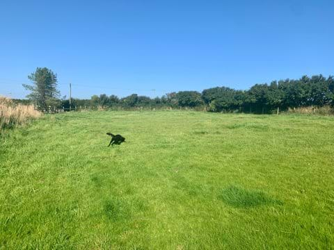 Field to exercise dogs