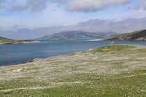 Machair in flower, Hushinish, Isle of Harris