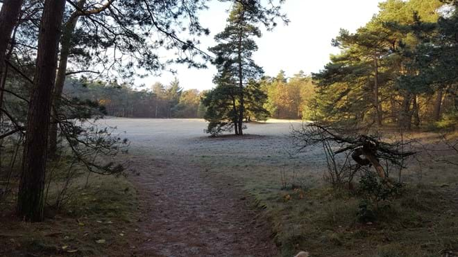 Part of the Drents-Friese Wold - just 10 minutes away from the farmhouse!