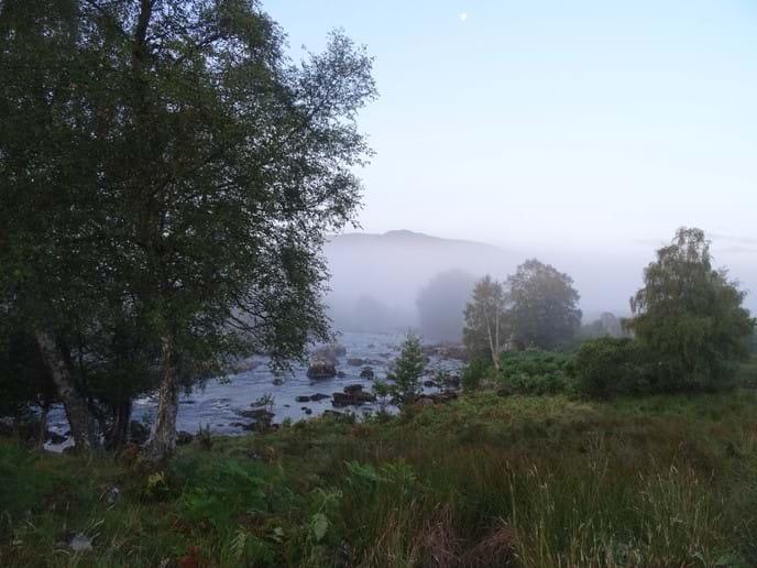Misty River Gaur.