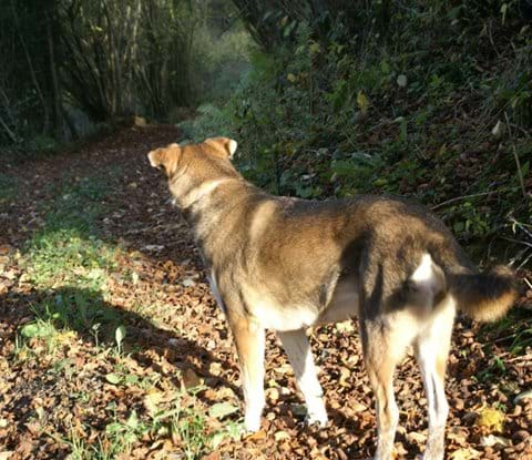 Eco-Gites of Lenault, a self catering cottage/gite , sleeps 5 in Normandy, France, welcomes dogs