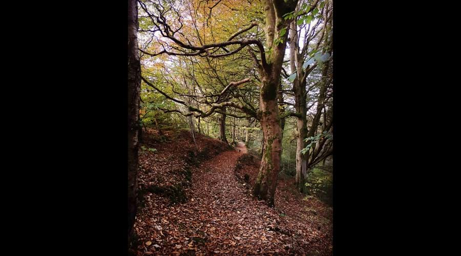 Autumn walk through Glen Helen