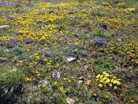 Gîte South of France walking wildlife holiday cevennes flora