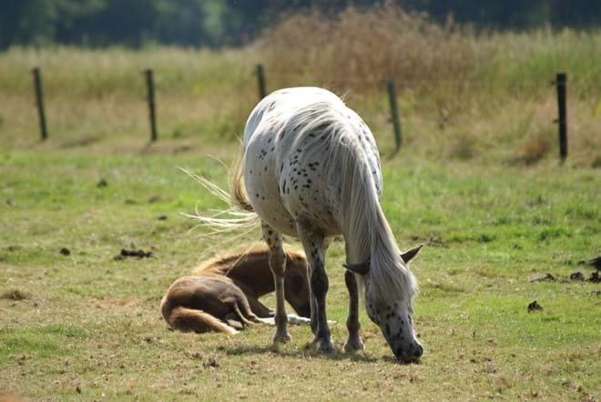 Rural Drenthe
