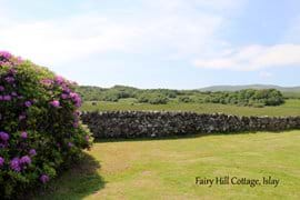 Part of the garden at Fairy Hill Cottage