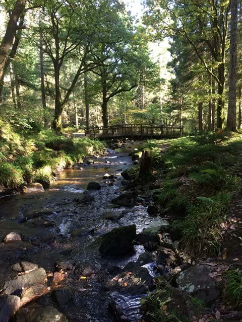 The waterfall walk at Aberfoyle
