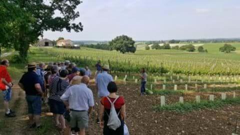 Local vineyard tour