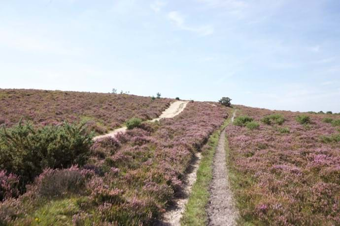 A walk in the Heather 15 minutes from the self catering accommodation.