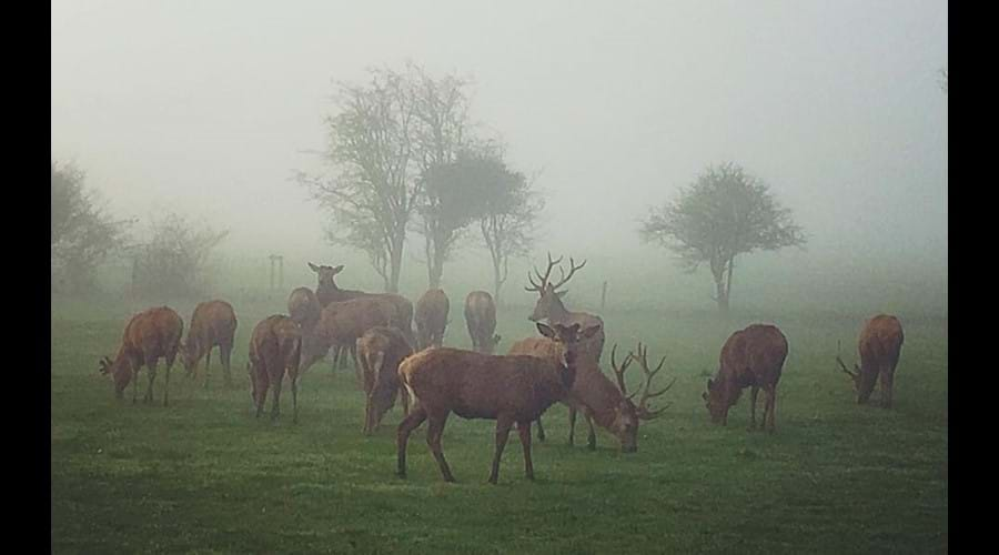DEER IN THE MIST IN APRIL
